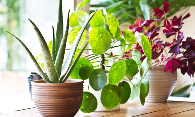 Benefits Of Houseplants And The Right Plants For The Right Light